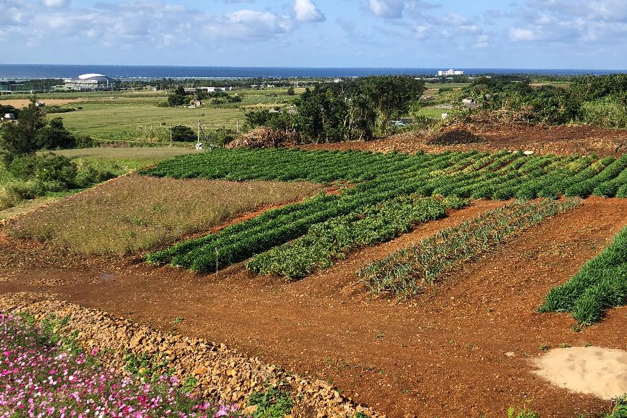 農業事業イメージ